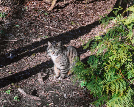 Adult beauty grey cat in sunny rays Stock Photo