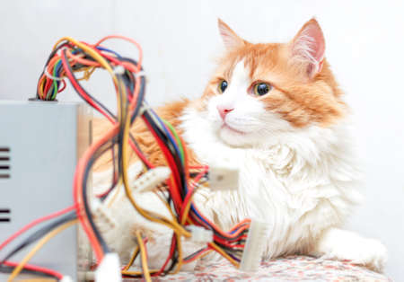 Pretty adult red cat and computer wires in bright relax home interior Stock Photo