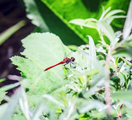 Pretty dragonfly on green summer sunny leaf
