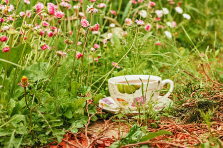 Cup of tea in green summer grass Stock Photo