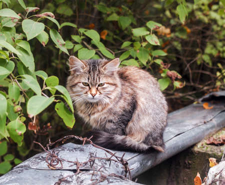 Pretty homeless fur motley cat at cloudy day Stock Photo - 115114133