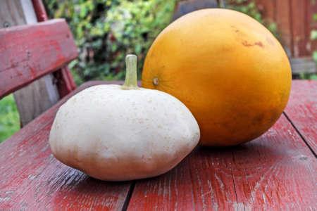 Couple of fall nature, ripe happy squash and melon Stock Photo - 115139070