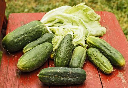 Ripe green fresh cucumbers from summer garden