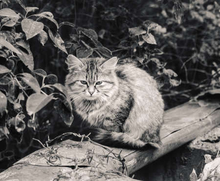 Pretty homeless fur motley cat at cloudy day in black and white Stock Photo