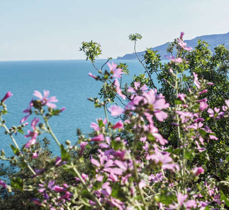 Pink flowers on background of blue sea distance at sunny day Stock Photo - 114741907