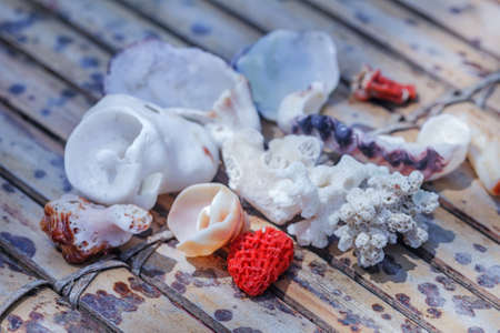 Better ocean shells and red coral for relax mood Stock Photo