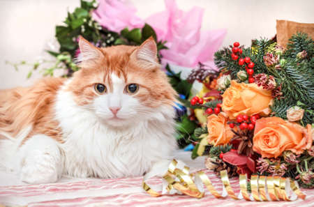 Luxurious aduly red cat and big New Year bouquet Stock Photo