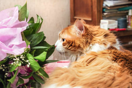 Beauty adult red cat and bouquet in home room Stock Photo - 114741966