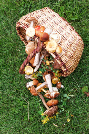 Forest mushrooms and wicker basket on green grass at day