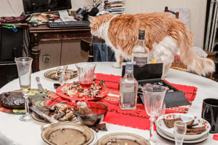 Pretty adult red cat on holiday table Stock Photo
