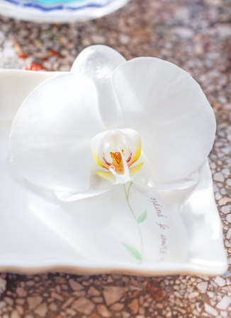 Tender blooming white orchid in square saucer Stock Photo - 114742301