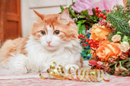 Pretty adult red cat and big bouquet