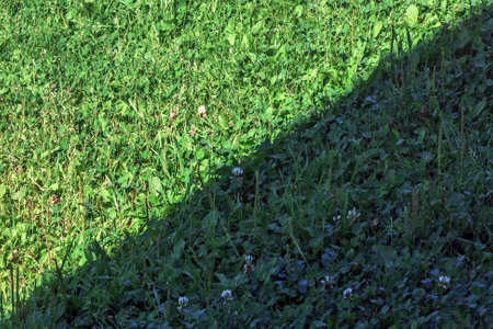 Happy green grass in shade and in sun