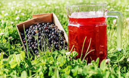 Fresh black currant berries and juice in jug at sunny day in green grass