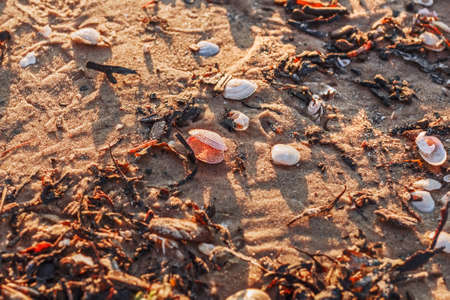 Small shells on sea sand in sunset light
