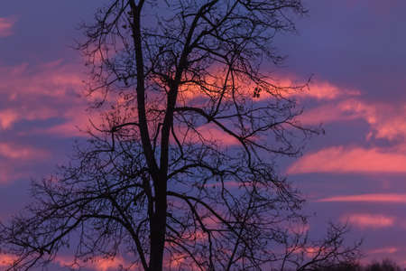 Romantic silhouette of big tree against blue and purple sunset