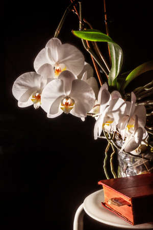 On dark background white blooming orchid and red book Stock Photo