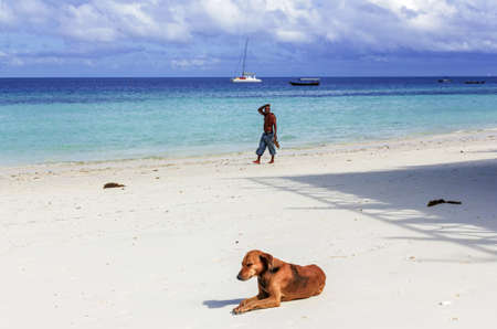 Pretty dog by day sea and silhouette of man