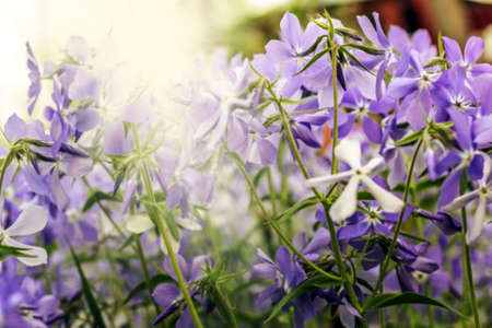 Real pretty purple flowers in sunny rays