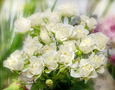 Real best bouquet of white roses for good mood present Banco de Imagens