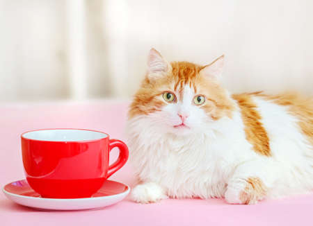 Pretty adult red cat and large red cup and saucer Standard-Bild