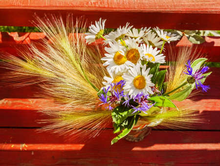 Pretty daisies and ears of corn on sunny summer day