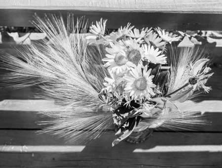 Bouquet daisies and ears in black and white Standard-Bild