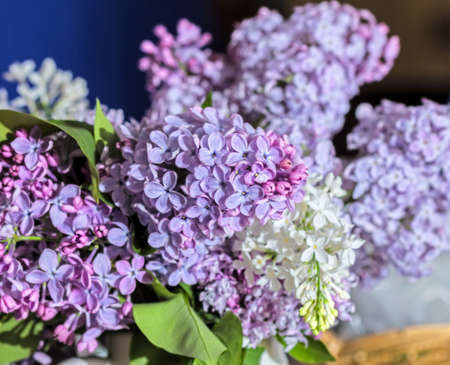 Real amazing fresh bouquet of spring soft purple lilac for good mood