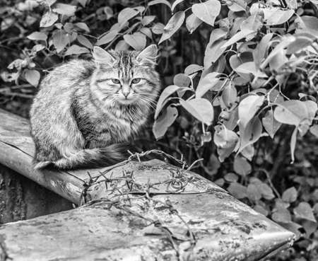 Real fluffy pretty homeless kitten teenager at summer cloudy day in garden black and white