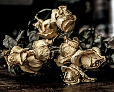 Real dry faded yellow flowers of roses on dark background Stock Photo