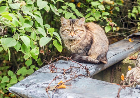 Real fluffy pretty homeless kitten teenager at summer cloudy day in garden