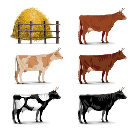 9,808 Dairy Cow Stock Vector Illustration And Royalty Free Dairy ...