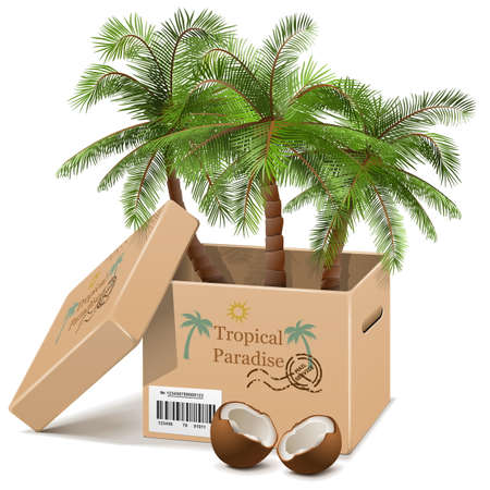 Vector Palm Tree in Box Vector