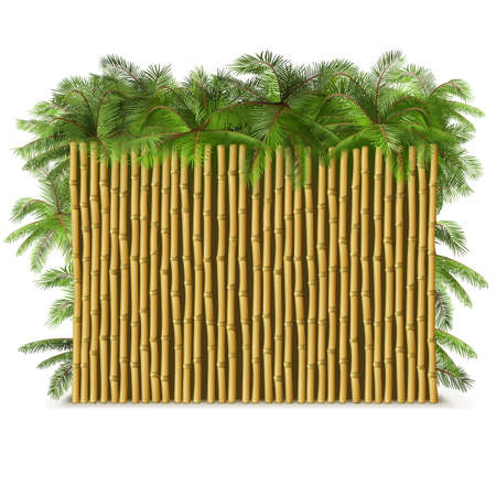Vector Bamboo Fence with Palm isolated on white background
