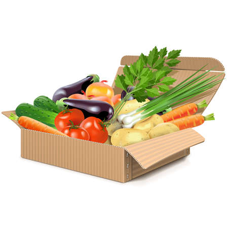 horticultural: Vector Carton Box with Vegetables isolated on white background