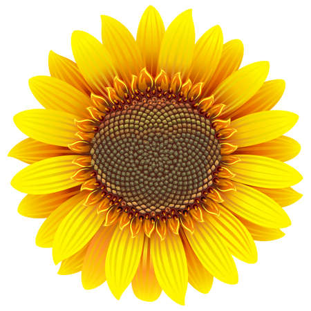 Vector Sunflower Icon isolated on white background Vettoriali