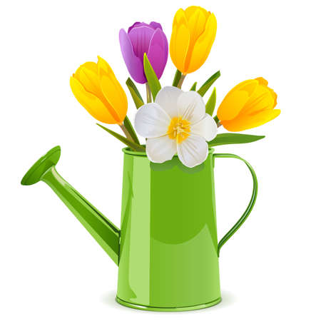 Vector Watering Can with Tulips isolated on white background