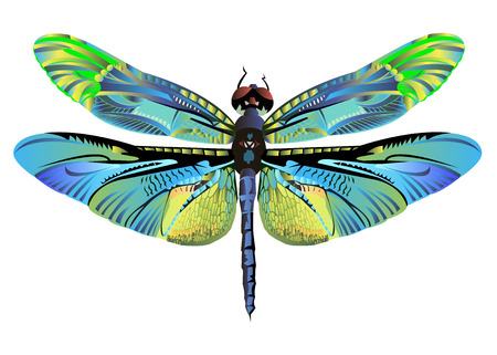 色アート トンボ自然野生動物フライ  イラスト・ベクター素材