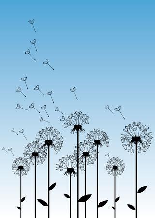 pistil: dandelion background botany flower blossom fluffy Illustration