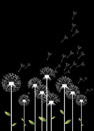 Löwenzahn hintergrund botanik blume blüte flaumig Vektorgrafik