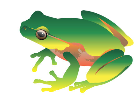 eyed: frog toad green small illustration color