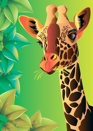 giraffe animal wild african tall nature