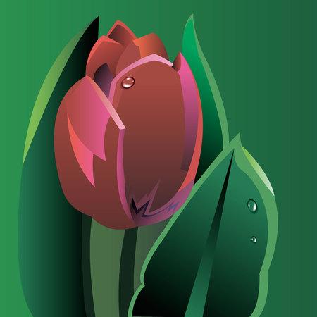 floral illustration nature tulip green spring