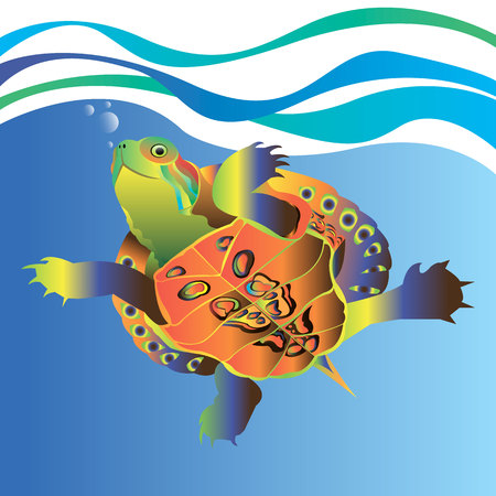 animal turtle illustration reptile cartoon nature