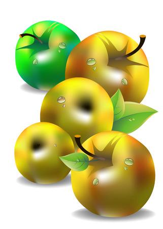 fruit leaf illustration apple fresh nature