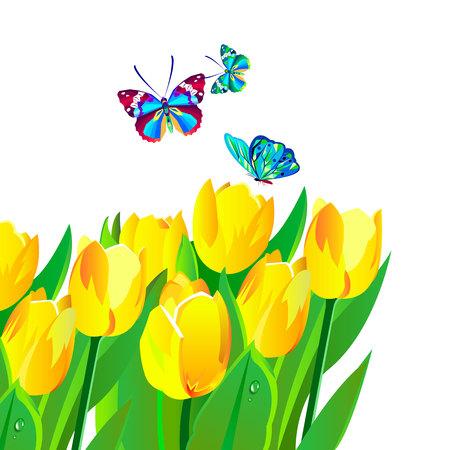 Vector illustration. Tulip, spring, flower, floral, nature Illustration