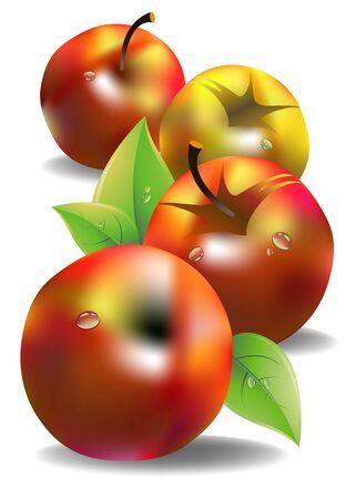 vector fruit leaf illustration apple fresh nature Illustration