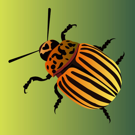 illustration nature potato colorado vector animal beetle Illustration