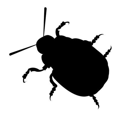 Abbildung Natur Kartoffel Colorado Vektor Tier Käfer