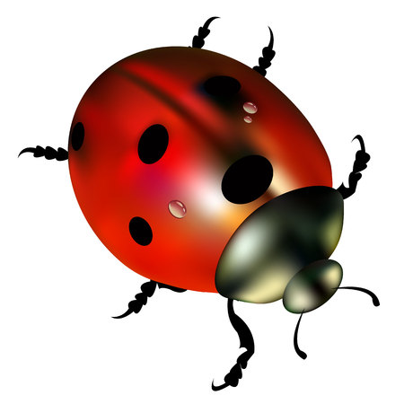 ladybug vector red illustration colored beetle insect